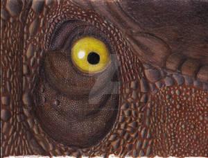 Rex Eye