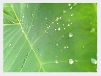 tear droplets by whitedaisy4alisha