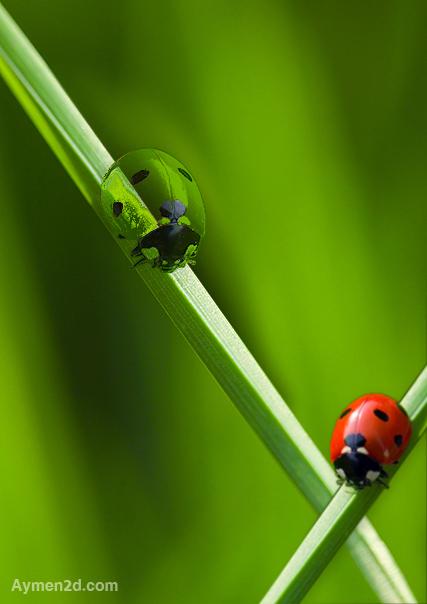 Beetle Glass by formalART