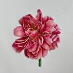 Dandelion Wish by yanotts
