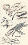 Liopleurodon 01