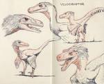 Velociraptors 01
