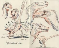 Velociraptors 02