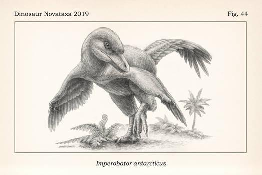 Imperobator antarcticus