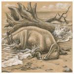Ajnabia odisseus
