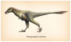 Tianyuraptor ostromi