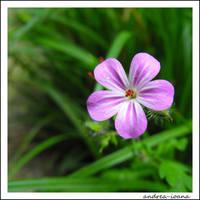 purple is my every-day mood by andrea-ioana