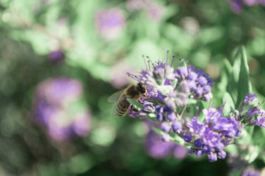 purple bee II by andrea-ioana