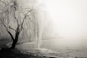 December weeping