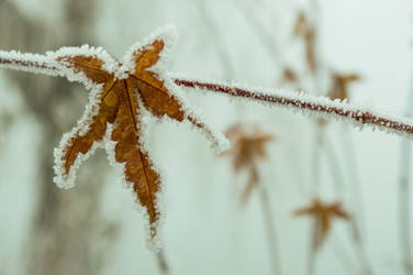 frozen leaf by andrea-ioana