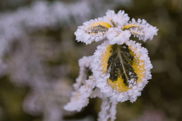 frozen leaf ii by andrea-ioana