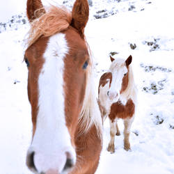 Horses in the snow by Marrazki