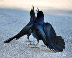 Avian Idol by SBG-CrewStock