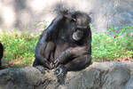 Chimp 5