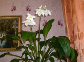 Flower by sheogarad