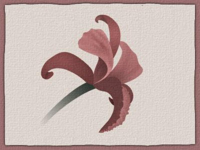 Orchid Graphic