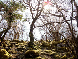 Native forests of Skye