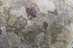 Lichen Map