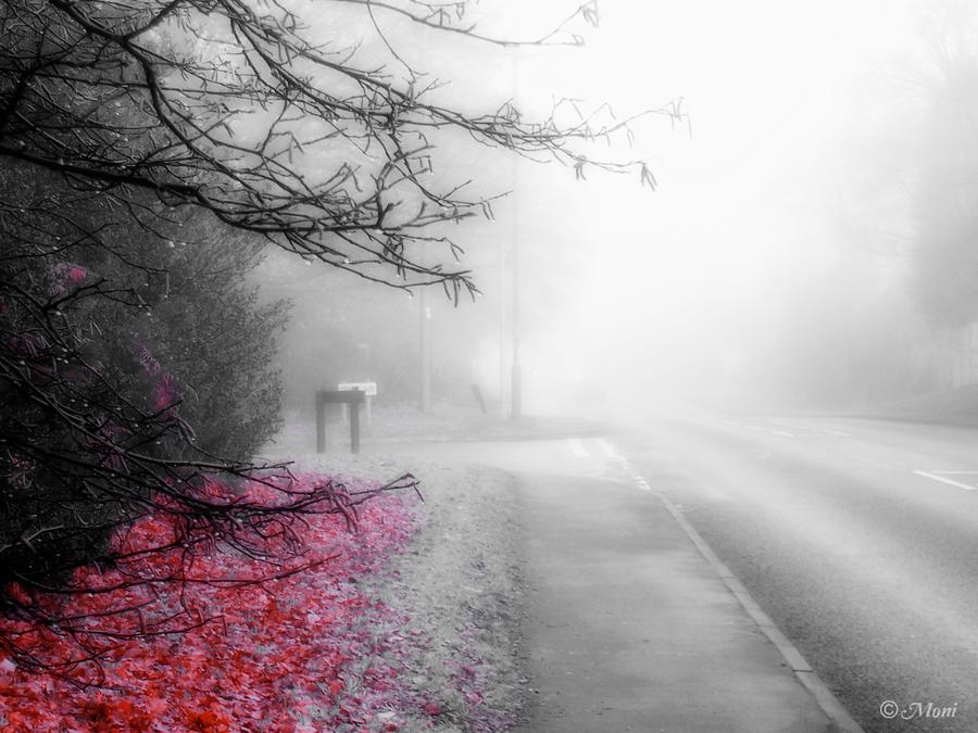 Foggy Morning by iria