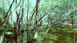 Silent Pond (13)