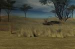 Serengeti background stock