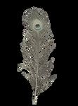 Albino Peacock Feather stock