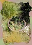 Little Pot of Cactus