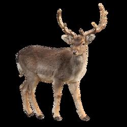 Deer Stock 1 (1-3) by Gilgamesh-Art