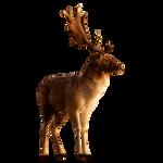Deer PNG Stock 3 (3-3)