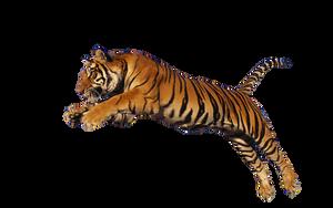 Tiger Stock 1 by Gilgamesh-Art