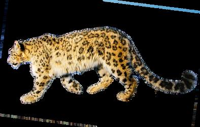 Jaguar PNG Stock 1 (1-3)