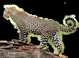 Jaguar PNG Stock 2 (2-3) by Gilgamesh-Art