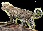 Jaguar PNG Stock 2 (2-3)