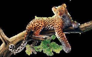 Jaguar PNG Stock 3 (3-3) by Gilgamesh-Art