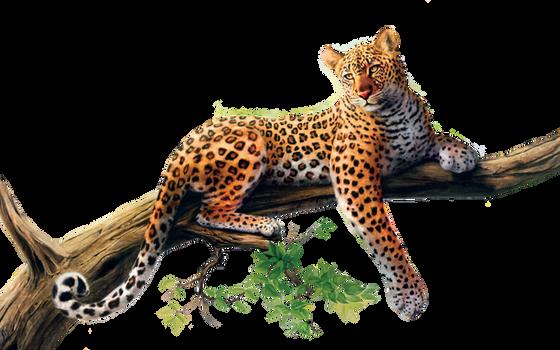 Jaguar PNG Stock 3 (3-3)