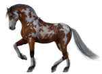 Horse PNG Stock 2