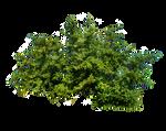 Bush PNG Stock 4 by Gilgamesh-Art
