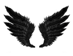 Black Wings PNG Stock