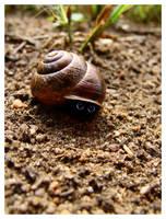 snail by tuutpiip