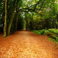 Autumn I by toosas