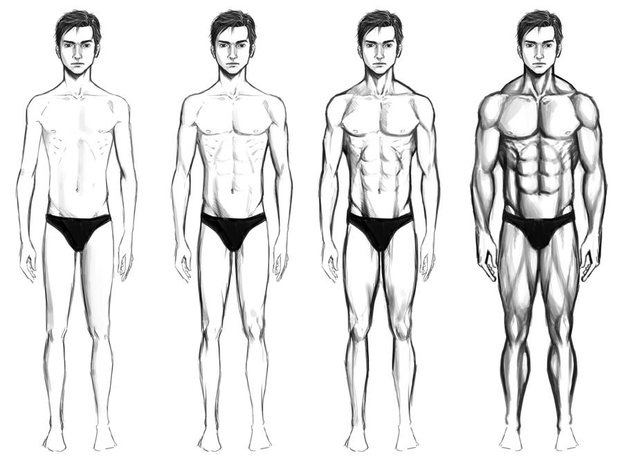 Male Body Types by chaosbringer99