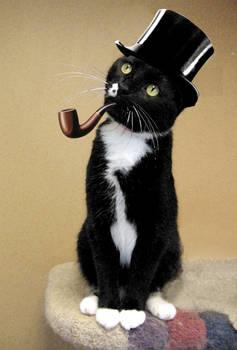 Ceci n'est pas une Kitty