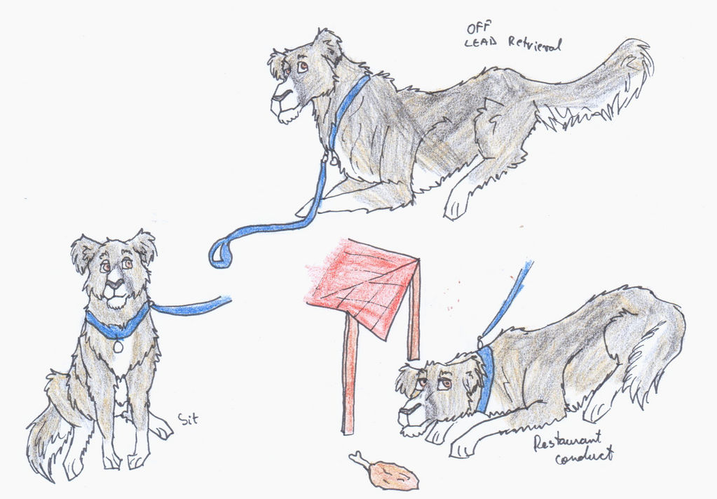 Cezar Service Dog Test By Vafavale On Deviantart