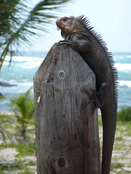 Just posing on ma pole