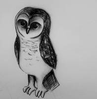 Sooty owl by HoneyBunny249