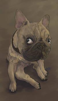 Mischievous Frenchie