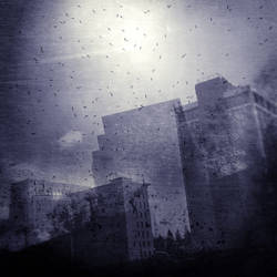 untitled (city birds) by filmnoirphotos