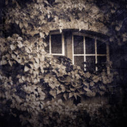untitled (window and ivy) by filmnoirphotos
