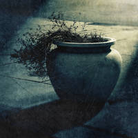 untitled (large vessel and plant) by filmnoirphotos