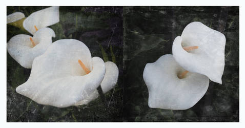 untitled diptych (lilies) by filmnoirphotos